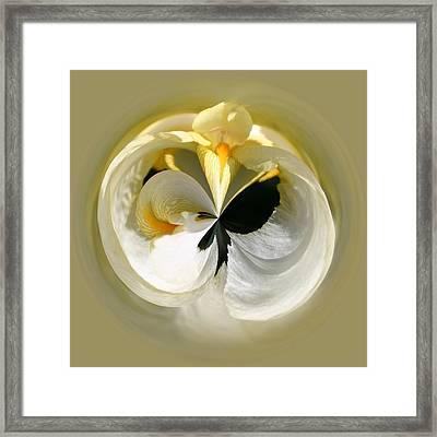 Yellow Iris 101 Framed Print