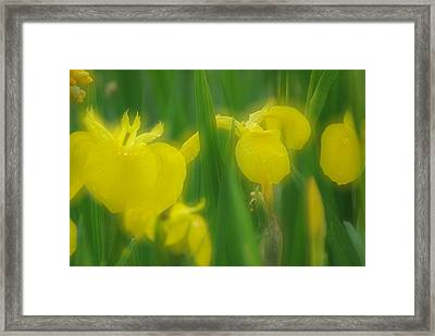 Yellow Iris Double Framed Print