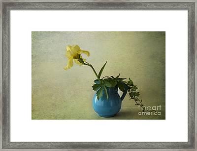 Yellow Iris Framed Print by Elena Nosyreva