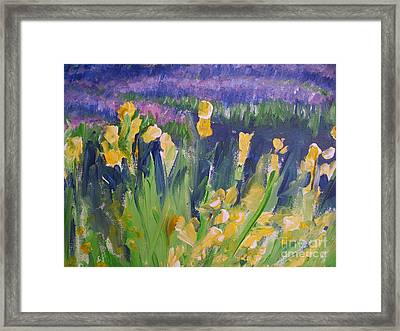 Yellow Iris Framed Print by Eric  Schiabor