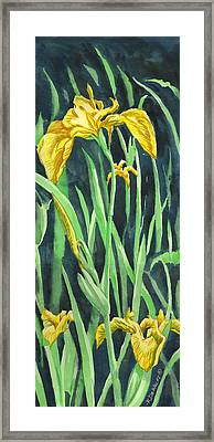 Yellow Iris Framed Print by Richard De Wolfe