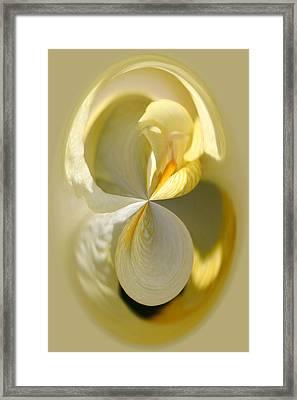 Yellow Iris Series 105 Framed Print