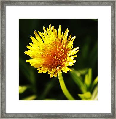 Framed Print featuring the photograph Yellow Is A Colour.. by Al Fritz