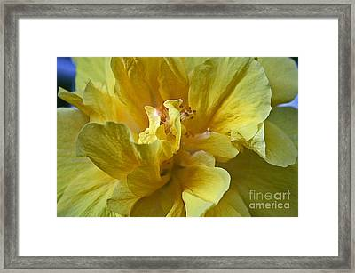 Framed Print featuring the photograph Yellow Is Yellow by Alison Caltrider