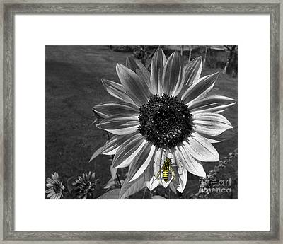 Yellow Jacket Framed Print by Janice Westerberg