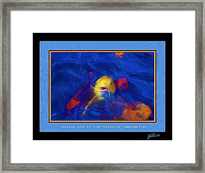Yellow Koi At The National Arboretum Framed Print