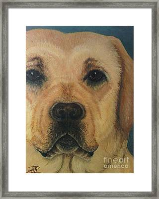 Yellow Lab Framed Print