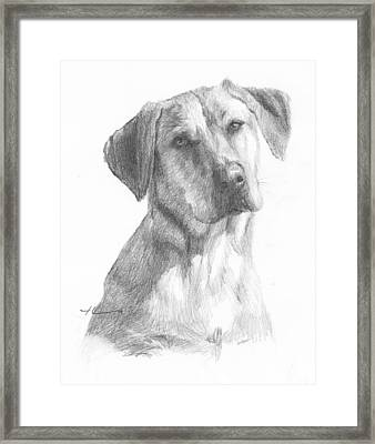 Yellow Lab Dog Pencil Portrait Framed Print by Mike Theuer