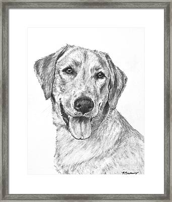Yellow Lab Head And Shoulders Framed Print
