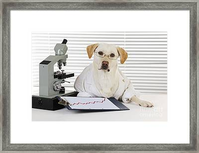 Yellow Lab In Lab Coat Framed Print