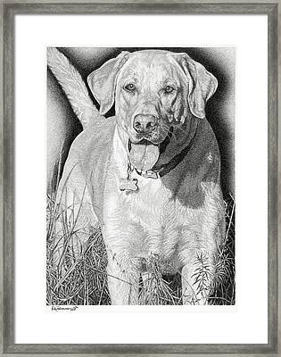 Yellow Lab In The Field Framed Print by Rob Christensen