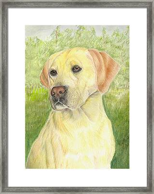 Yellow Labrador Retiever Framed Print by Ruth Seal