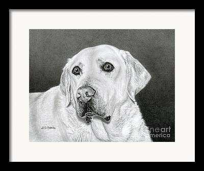 Charcoal Dog Drawing Drawings Framed Prints