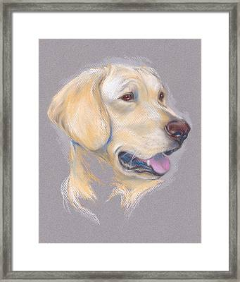 Yellow Labrador Retriever Portrait Framed Print by MM Anderson