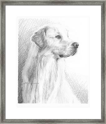 Yellow Labrador Show Dog Pencil Portrait Framed Print by Mike Theuer