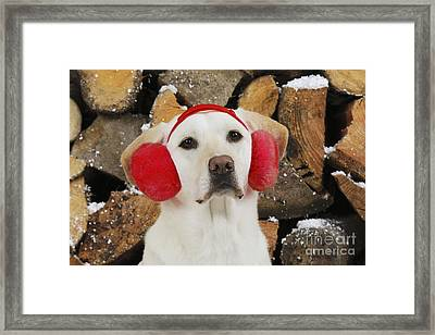 Yellow Labrador With Ear Muffs Framed Print