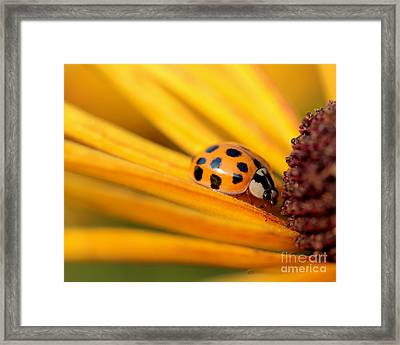 Framed Print featuring the photograph Yellow Lady - 1 by Kenny Glotfelty