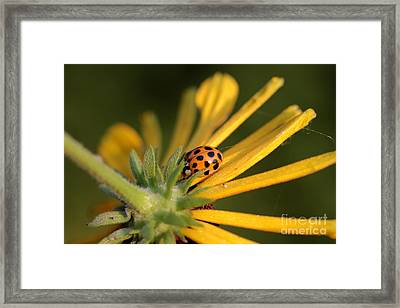 Framed Print featuring the photograph Yellow Lady - 2 by Kenny Glotfelty