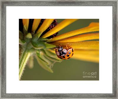 Framed Print featuring the photograph Yellow Lady - 3 by Kenny Glotfelty