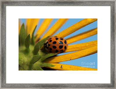 Framed Print featuring the photograph Yellow Lady Bug - 5 by Kenny Glotfelty