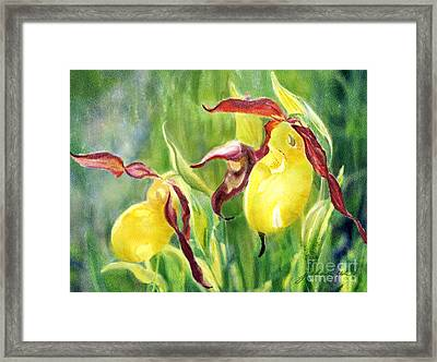 Yellow Lady Slippers Framed Print by Joan A Hamilton