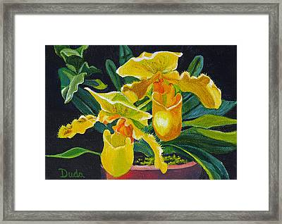Yellow Lady Slippers Framed Print by Susan Duda