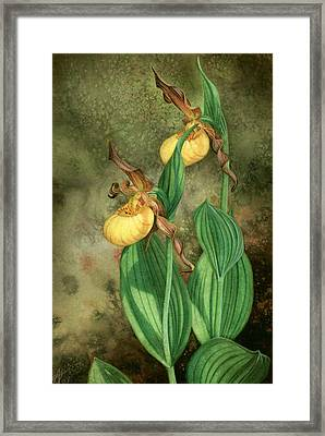 Yellow Lady's Slippers Framed Print