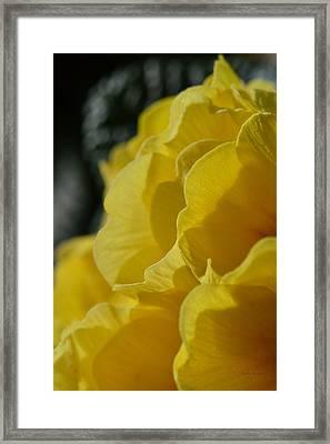 Yellow Landscape Framed Print