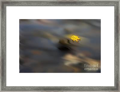 Yellow Leaf Floating In Water Framed Print by Dan Friend