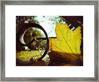 Yellow Leaf On A Bench In A Park Framed Print