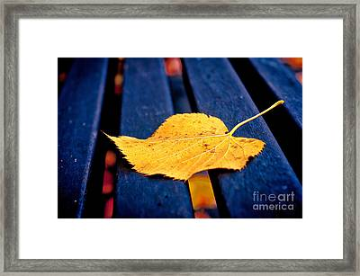 Yellow Leaf On Bench II Framed Print by Silvia Ganora