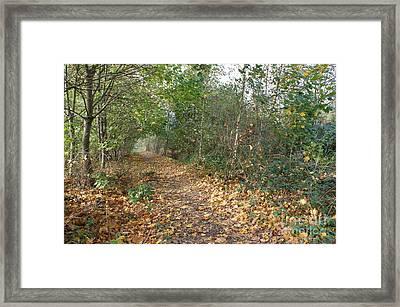 Yellow Leaf Road 2 Framed Print