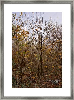 Yellow Leaf Road 5 Framed Print