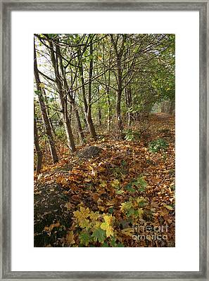 Yellow Leaf Road 6 Framed Print