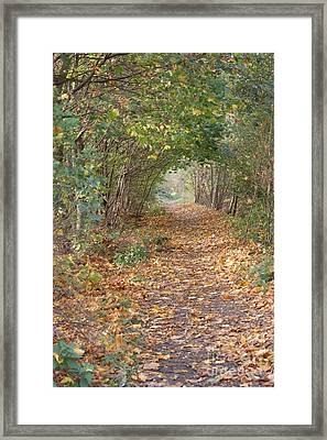 Yellow Leaf Road 7 Framed Print