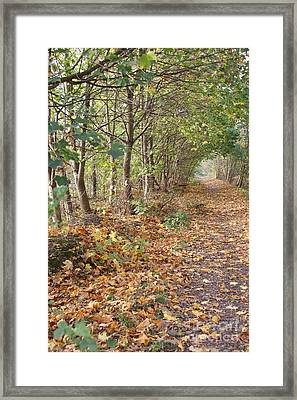 Yellow Leaf Road 8 Framed Print