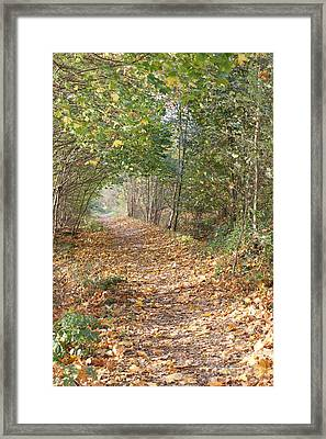 Yellow Leaf Road 9 Framed Print