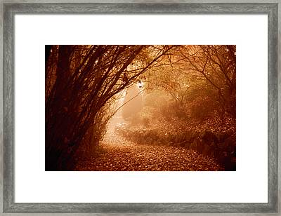 Yellow Leaf Road Framed Print