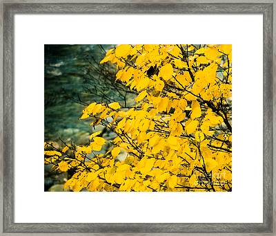 Yellow Leaves By The Water Framed Print