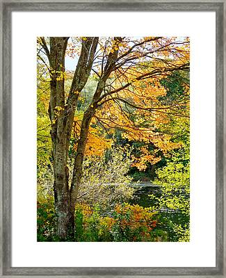 Yellow Leaves Framed Print by Janice Drew