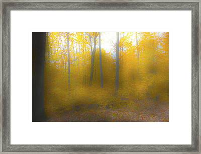Yellow Leaves Framed Print by Jim Baker