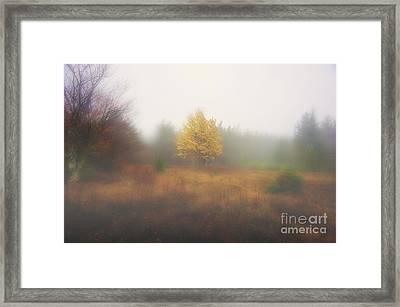 Yellow Leaves Of Tree In Fog At Dolly Sods Framed Print by Dan Friend