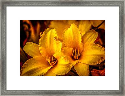 Yellow Lillies Framed Print