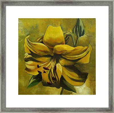 Yellow Lily Framed Print by Alfred Ng