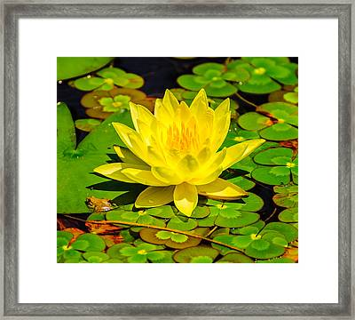 Framed Print featuring the photograph Yellow Lily by John Johnson