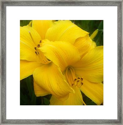 Yellow Lily Framed Print by Saribelle Rodriguez