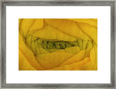 Yellow Framed Print by Mark Johnson