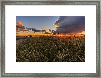 Yellow Meadow Under Sunset Sky With Clouds IIi Framed Print