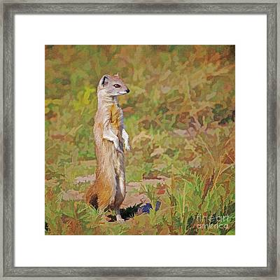 Yellow Mongoose Cynictis Penicillata Framed Print by Liz Leyden