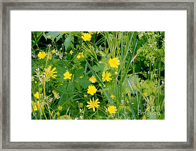 Framed Print featuring the photograph Yellow Monkey Flowers by Gary Brandes